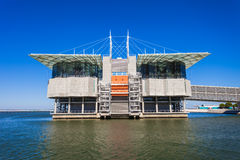 The Lisbon Oceanarium Royalty Free Stock Photo