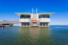 The Lisbon Oceanarium Royalty Free Stock Images