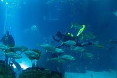 Lisbon Oceanarium Royalty Free Stock Images