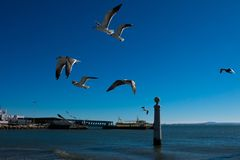 Seagulls flying waiting to be fed. Tagus river. Lisbon. Portugal. January 28, 2018. Seagulls flying waiting to be fed. Tagus river Rio Tajo Stock Images