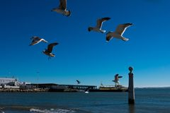 Seagulls flying waiting to be fed. Tagus river. Lisbon. Portugal. January 28, 2018. Seagulls flying waiting to be fed. Tagus river Rio Tajo Stock Photo