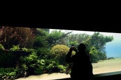 22-02-2018, Lisbon, Portugal, Oceanario de Lisboa: people visiting the temporary exibition of Takashi Amano for Oceanario de. Lisboa, Underwater Forests royalty free stock photos