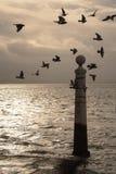 Lisbon's dock. An ancient column of the port of Lisbon on the Tagus River Stock Photography