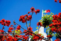 Lisbon's Flowers. The sky in Lisbon with Portugal's flag Stock Photography