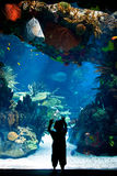 Lisbonne Oceanarium - badinez regarder au beau réservoir central Photo stock