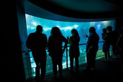 Lisbonne Oceanarium Portugal Photo stock