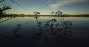Lisci il lago di superficie della foresta Fotografia Stock