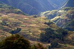 Lishui terrace scenery. Asia China Zhejiang Lishui terrace Scenery stock photography