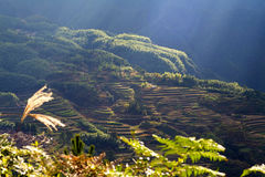 Lishui terrace scenery Royalty Free Stock Images