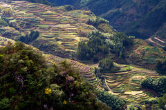 Lishui terrace scenery Stock Photos