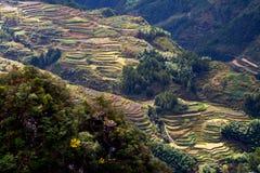 Lishui terrace scenery. Asia China Zhejiang Lishui terrace Scenery stock photos