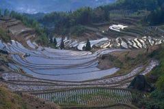 Lishui terrace scenery. Asia China Zhejiang Lishui terrace Scenery royalty free stock image