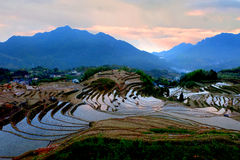 Lishui terrace scenery Royalty Free Stock Photo
