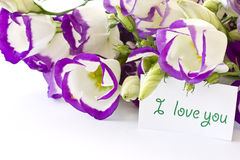 Lisianthus Stock Photography