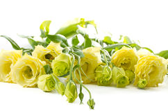 Lisianthus Stock Images