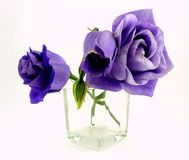 Lisianthus Images stock