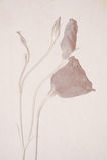 Lisianthus blommar på en texturerad bakgrund arkivfoton