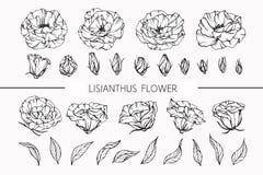 Lisianthus blommar teckningen och skissar med linje-konst Arkivbild