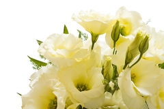 Lisianthus bouquet. Isolated  on white with clipping path Royalty Free Stock Photos