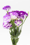 Lisianthus flower Stock Image