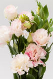 Lisianthus flower Stock Photo