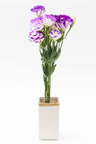 Lisianthus flower Royalty Free Stock Photography