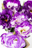 Lisianthus flower Stock Photography