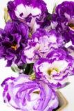 Lisianthus flower Stock Photography