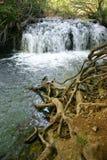 Lisine Serbian nature Stock Photos
