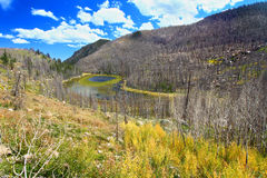 Lisiątko Jeziorne Skaliste góry Kolorado Zdjęcie Stock