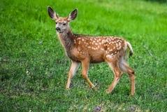 lisma lawn Royaltyfri Fotografi