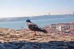 Lissabon Royalty-vrije Stock Foto's