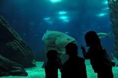 Lissabon Oceanarium Lizenzfreie Stockfotos