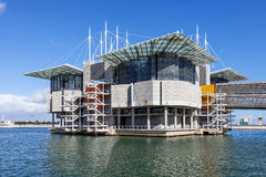 Lissabon Oceanarium Stock Afbeeldingen