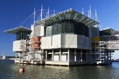 Lissabonet Oceanarium Arkivbild