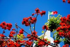 Lissabons Blumen Stockfotografie