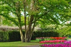 LISSE, ΚΆΤΩ ΧΏΡΕΣ - 22 Απριλίου 2017: Δέντρο με μια δέσμευση rin Στοκ Εικόνες
