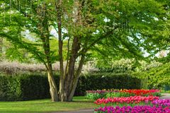 LISSE, НИДЕРЛАНДЫ - 22-ое апреля 2017: Дерево с захватом rin стоковое фото