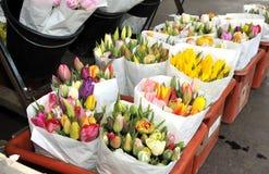 Lisse jaune de tulipes Image stock