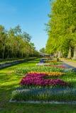 LISSE, PAESI BASSI - 4 APRILE 2008: Vista della primavera di Keuken famoso Fotografie Stock Libere da Diritti