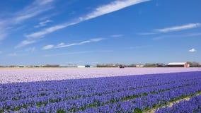 Lisse près de jardin de Keukenhof, Pays-Bas Photographie stock libre de droits