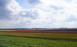 Lisse - tierra de los tulipanes Imagenes de archivo
