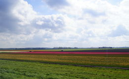 Lisse - tulips land. Lisse is a town and municipality in the western Netherlands, in the province of South Holland Stock Images