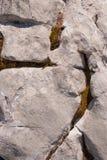 Lissez la pierre naturelle avec les fissures uniques de veines de lumière envahies avec de la mousse et le lichen images stock