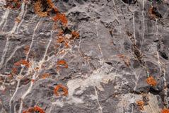 Lissez la pierre naturelle avec les veines uniques des fissures, envahies avec de la mousse et le lichen images stock