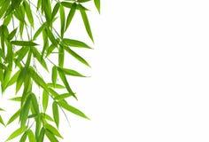 list do bambusów Fotografia Stock