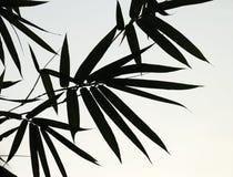 list do bambusów ilustracji