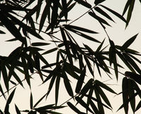 list do bambusów Obraz Stock