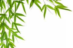 list do bambusów Zdjęcie Royalty Free