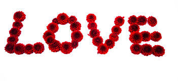 List miłosny dalia kwiaty odizolowywający Fotografia Stock